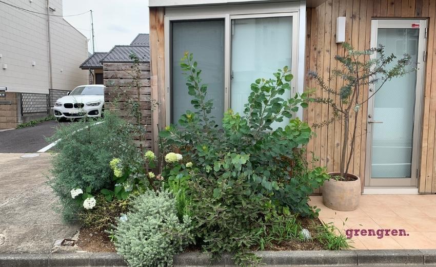 花壇の整理のためにミモザを移植した世田谷区の花壇