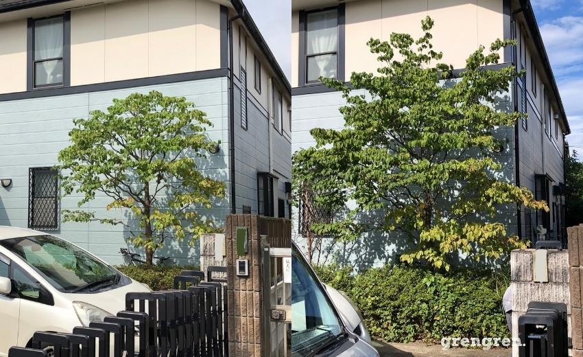 世田谷区の個人邸で施工した樹木剪定と草刈り作業