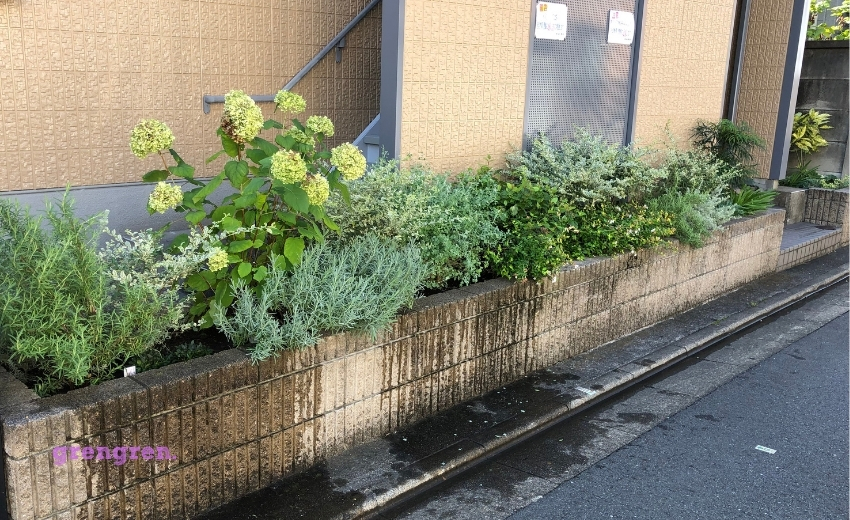夏の長雨で成長した世田谷区のマンション花壇の剪定管理後の花壇の様子