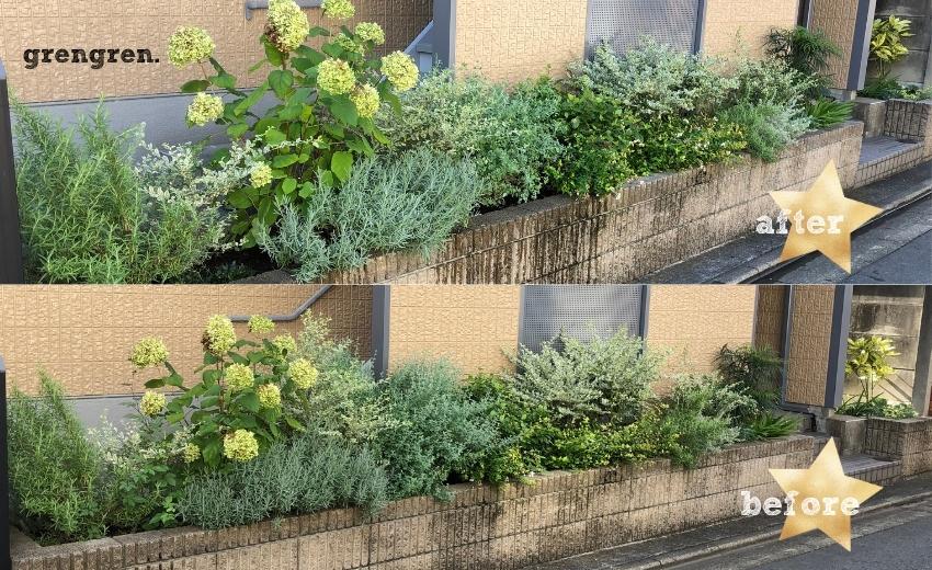 世田谷区のマンション花壇の剪定前と剪定後の花壇の違い