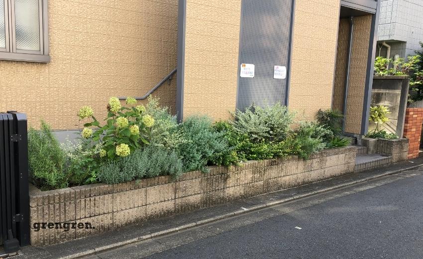 夏の長雨でグイっと成長した世田谷区のマンション花壇の植物